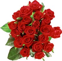 rose_PNG646