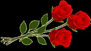red-rose-clip-art-5332